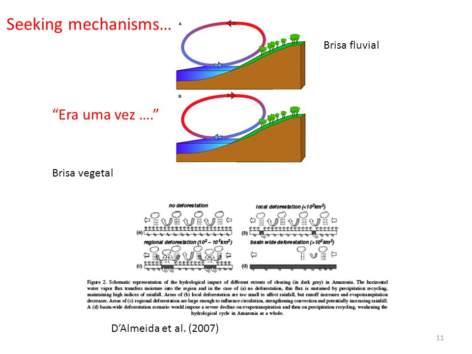Era uma vez …. D'Almeida et al. (2007) 11 Brisa vegetal Brisa fluvial Seeking mechanisms…