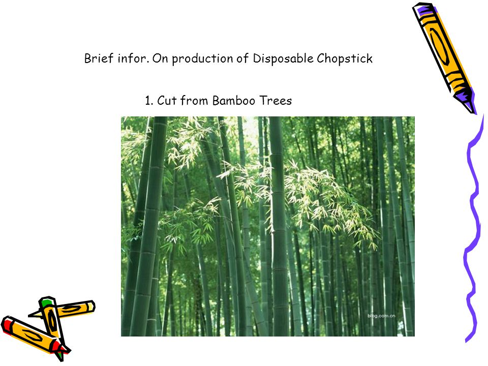 1. Cut from Bamboo Trees Brief infor. On production of Disposable Chopstick
