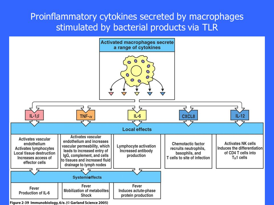 Proinflammatory cytokines secreted by macrophages stimulated by bacterial products via TLR