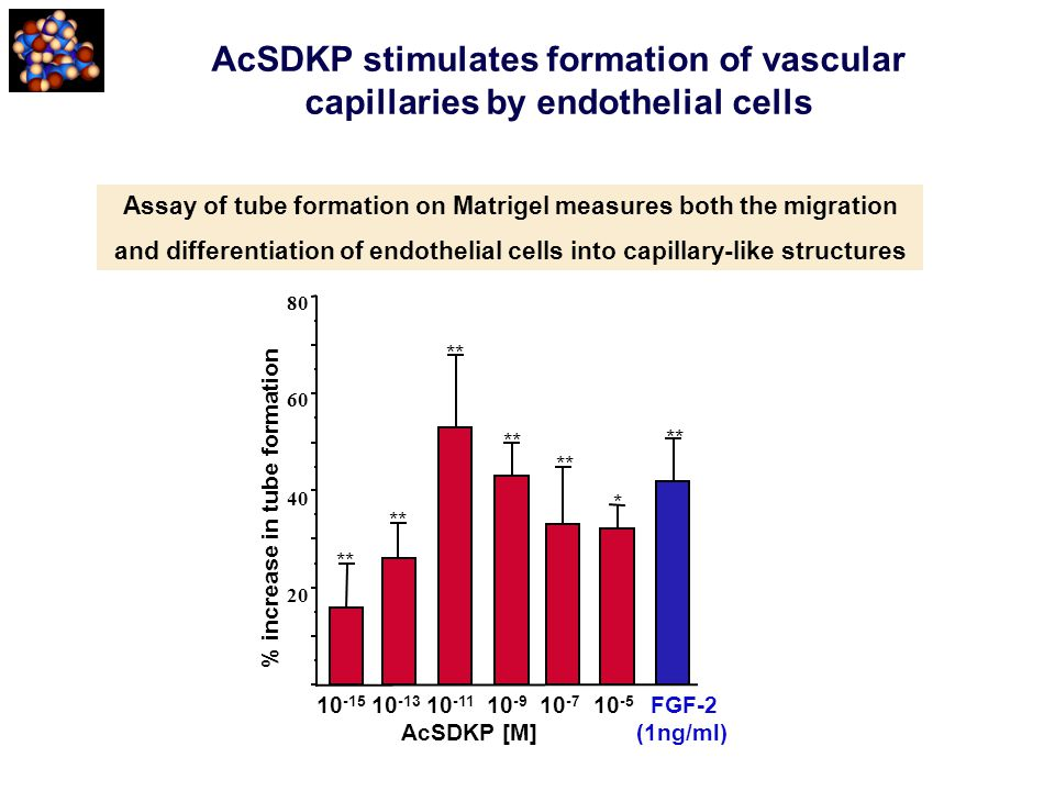 AcSDKP stimulates formation of vascular capillaries by endothelial cells Assay of tube formation on Matrigel measures both the migration and different