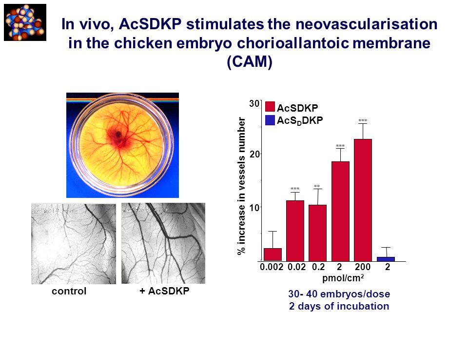 In vivo, AcSDKP stimulates the neovascularisation in the chicken embryo chorioallantoic membrane (CAM) control + AcSDKP 30- 40 embryos/dose 2 days of