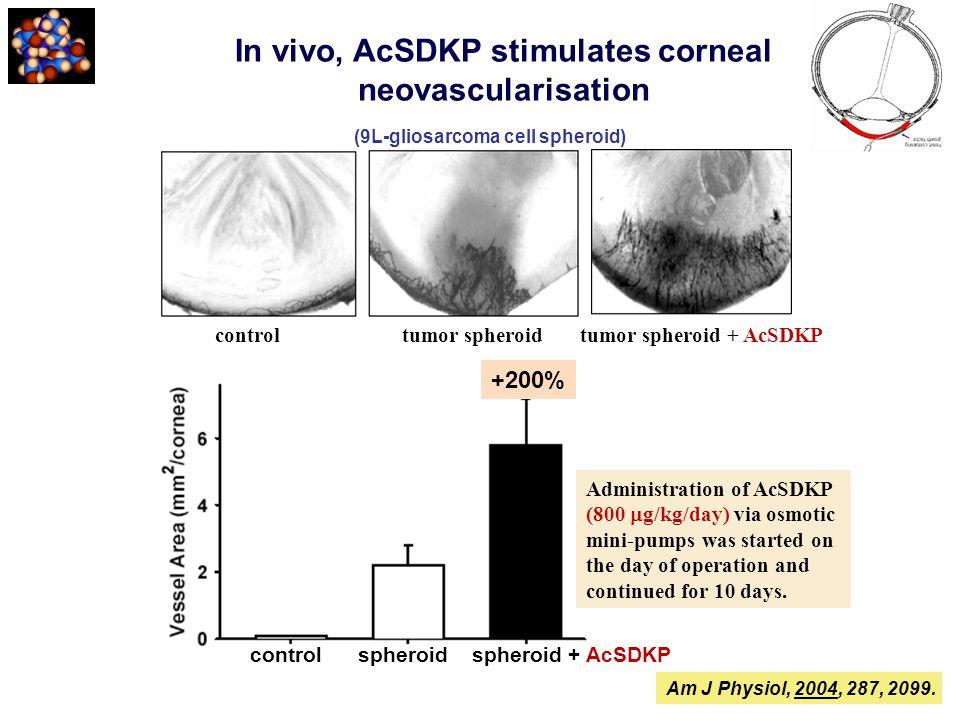 In vivo, AcSDKP stimulates corneal neovascularisation controltumor spheroid tumor spheroid + AcSDKP control spheroid spheroid + AcSDKP Administration