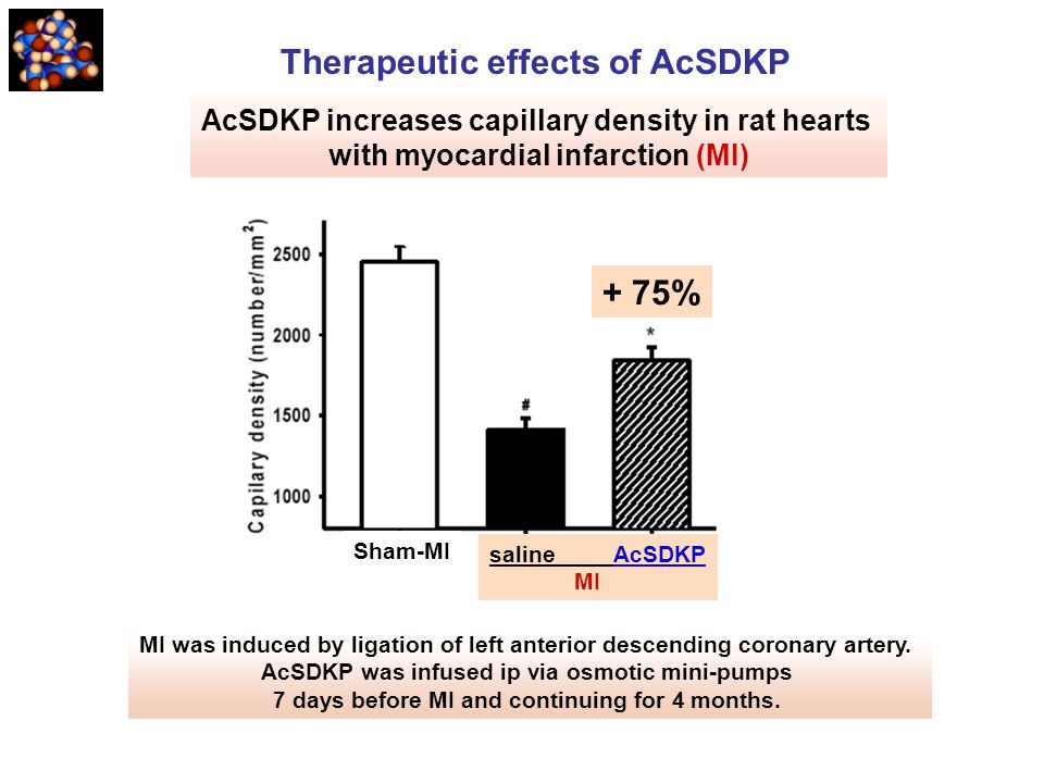 AcSDKP increases capillary density in rat hearts with myocardial infarction (MI) MI was induced by ligation of left anterior descending coronary arter