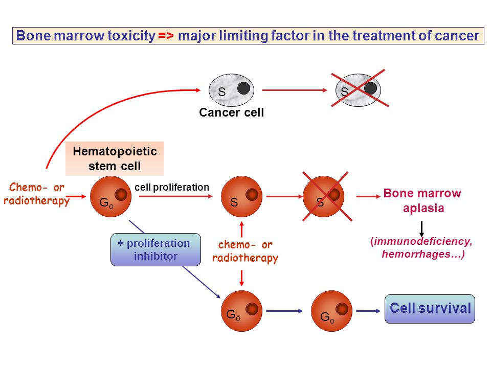 GoGo SS GoGo GoGo S S Hematopoietic stem cell Chemo- or radiotherapy chemo- or radiotherapy + proliferation inhibitor Bone marrow aplasia Cancer cell
