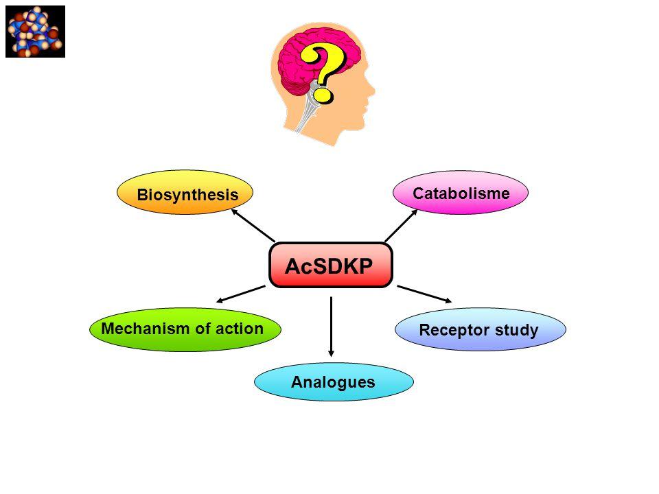Biosynthesis AcSDKP Receptor study Mechanism of action Catabolisme Analogues