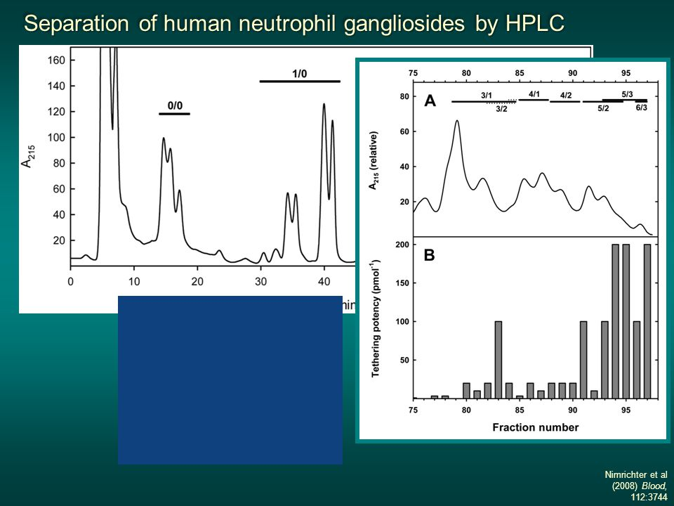 Separation of human neutrophil gangliosides by HPLC Separation of human neutrophil gangliosides by HPLC Separation of human neutrophil gangliosides by