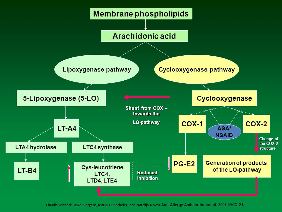 Claudia Jenneck, Uwe Juergens, Markus Buecheler, and Natalija Novak Ann Allergy Asthma Immunol. 2007;99:13–21. Membrane phospholipids Arachidonic acid