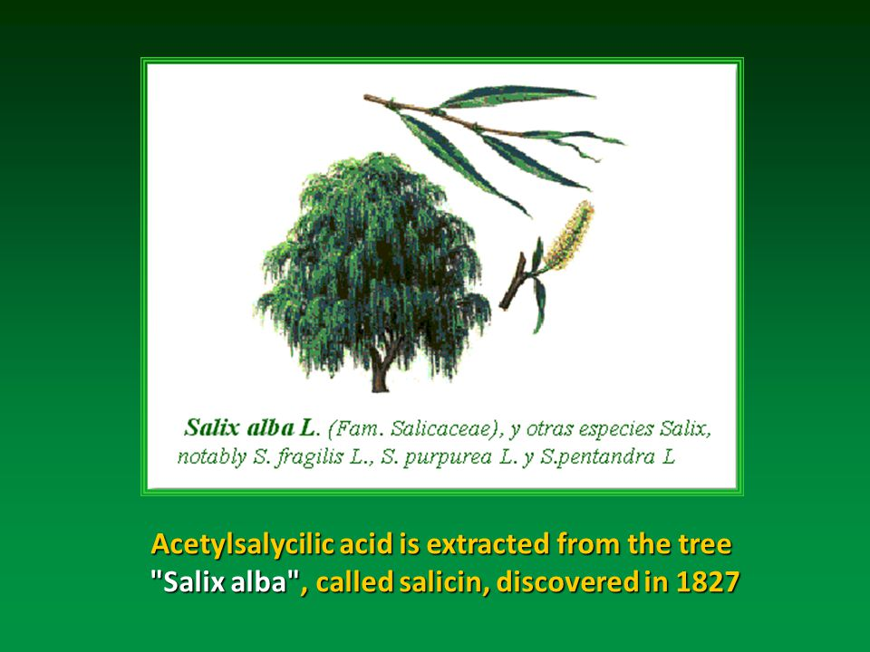 Acetylsalycilic acid is extracted from the tree Salix alba , called salicin, discovered in 1827 Salix alba , called salicin, discovered in 1827