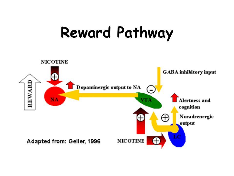Reward Pathway