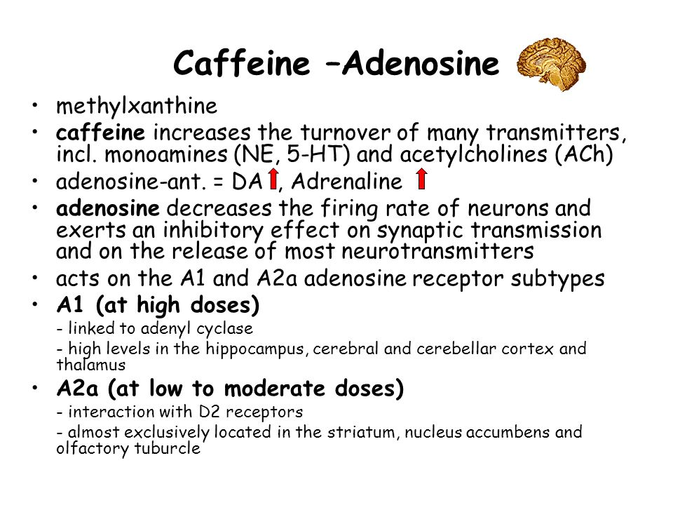 Caffeine –Adenosine methylxanthine caffeine increases the turnover of many transmitters, incl.