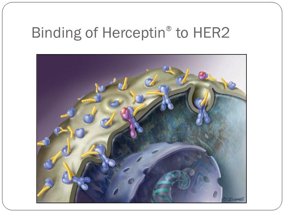 Binding of Herceptin ® to HER2