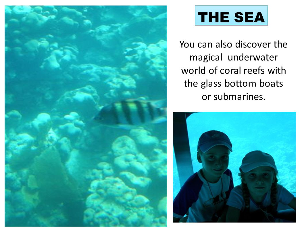 You can also discover the magical underwater world of coral reefs with the glass bottom boats or submarines. THE SEA