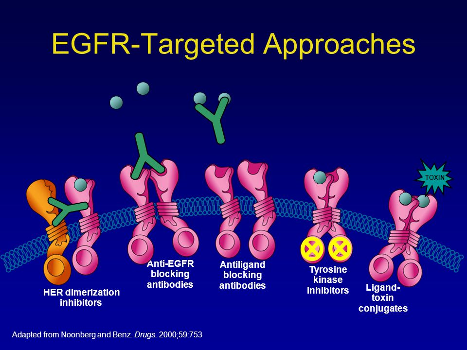 EGFR-Targeted Approaches Anti-EGFR blocking antibodies Antiligand blocking antibodies Tyrosine kinase inhibitors Ligand- toxin conjugates HER dimeriza