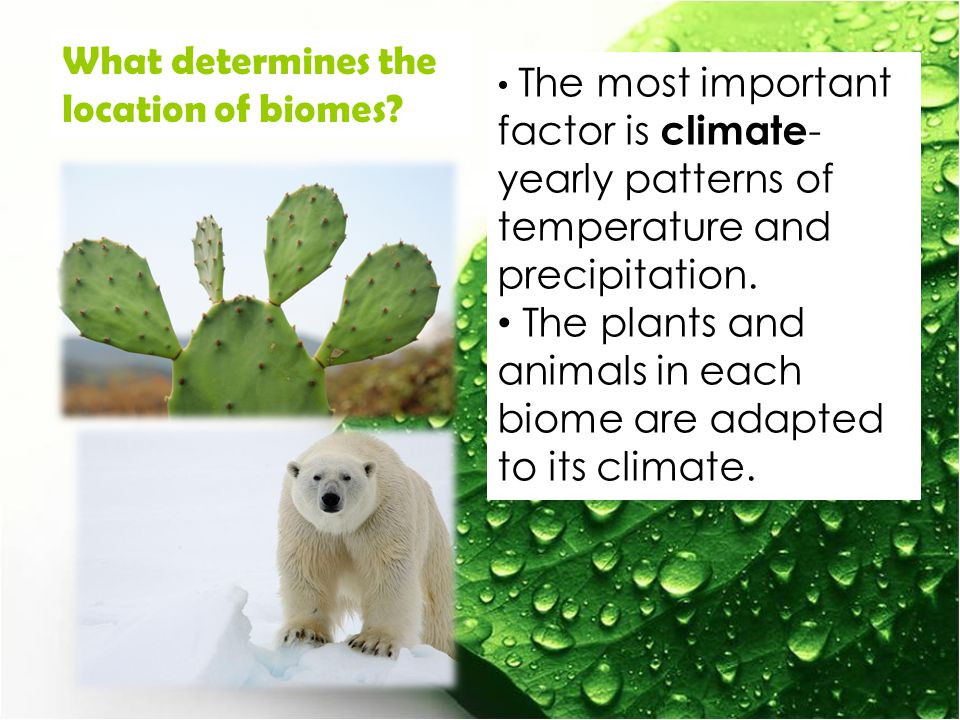 The most important factor is climate - yearly patterns of temperature and precipitation.
