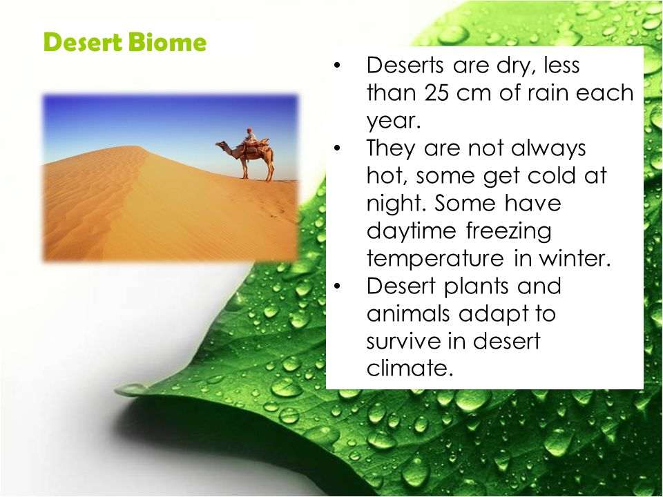 Deserts are dry, less than 25 cm of rain each year.