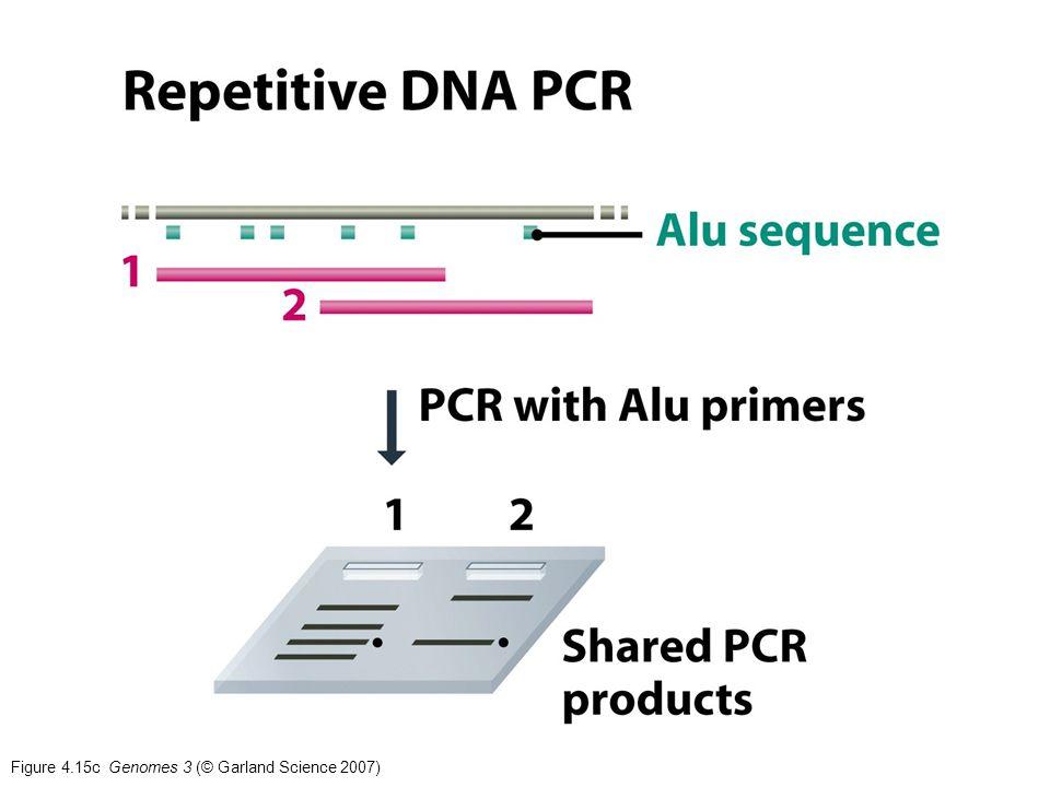 Figure 4.15c Genomes 3 (© Garland Science 2007)