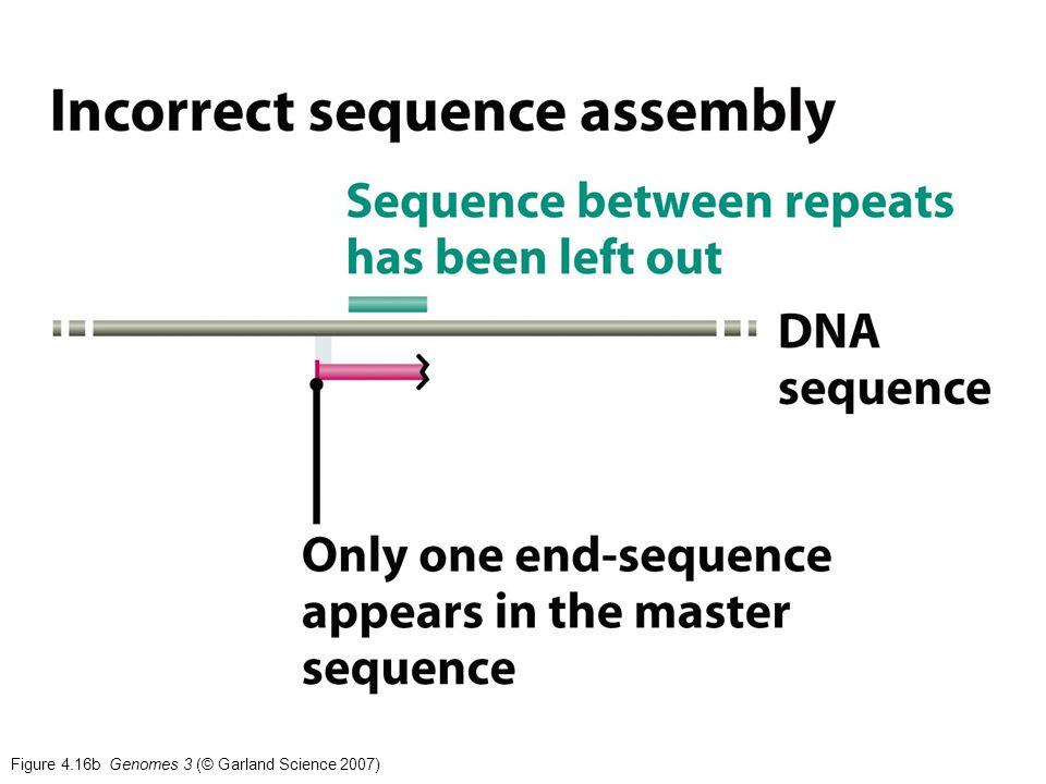 Figure 4.16b Genomes 3 (© Garland Science 2007)