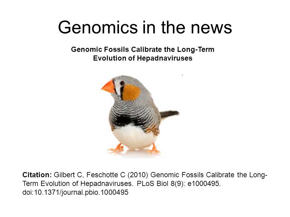 Genomics in the news Genomic Fossils Calibrate the Long-Term Evolution of Hepadnaviruses Citation: Gilbert C, Feschotte C (2010) Genomic Fossils Calib