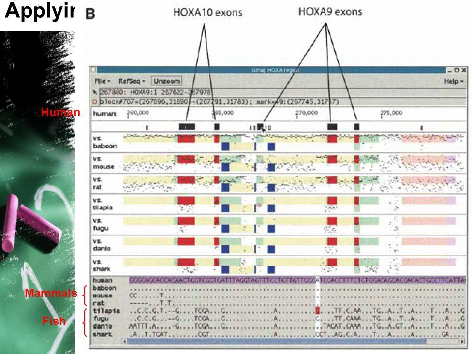 14 Applying TBA to vertebrate HOX clusters Human Mammals Fish