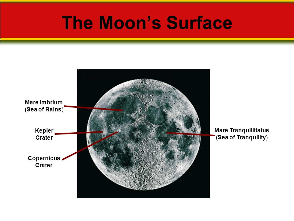 The Moon's Surface Mare Tranquillitatus (Sea of Tranquility) Mare Imbrium (Sea of Rains) Kepler Crater Copernicus Crater
