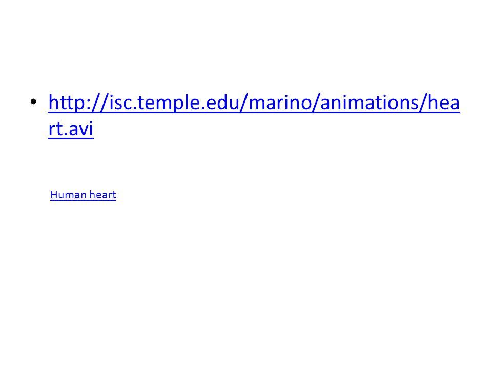 http://isc.temple.edu/marino/animations/hea rt.avi http://isc.temple.edu/marino/animations/hea rt.avi Human heart