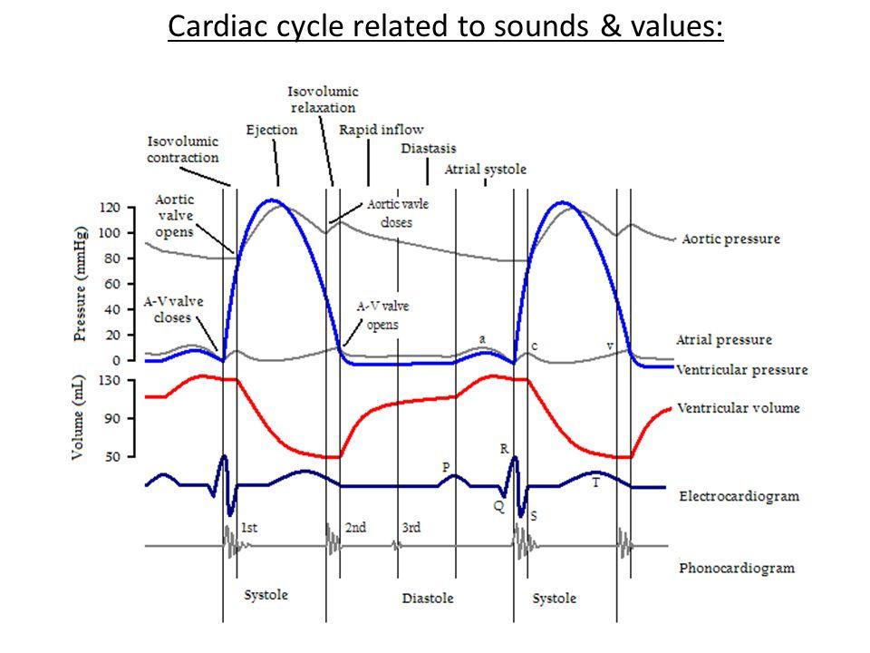 Sonographer: Pediatric echocardiography