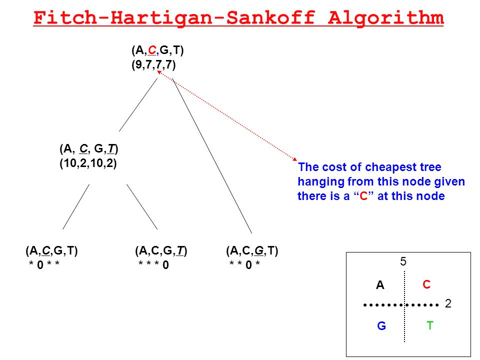 Fitch-Hartigan-Sankoff Algorithm The cost of cheapest tree hanging from this node given there is a C at this node A C T G 2 5 (A,C,G,T) * 0 * * (A,C,G,T) * * * 0 (A,C,G,T) * * 0 * (A, C, G,T) (10,2,10,2) (A,C,G,T) (9,7,7,7)