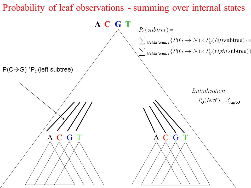 Probability of leaf observations - summing over internal states A C G T P(C  G) *P C (left subtree)