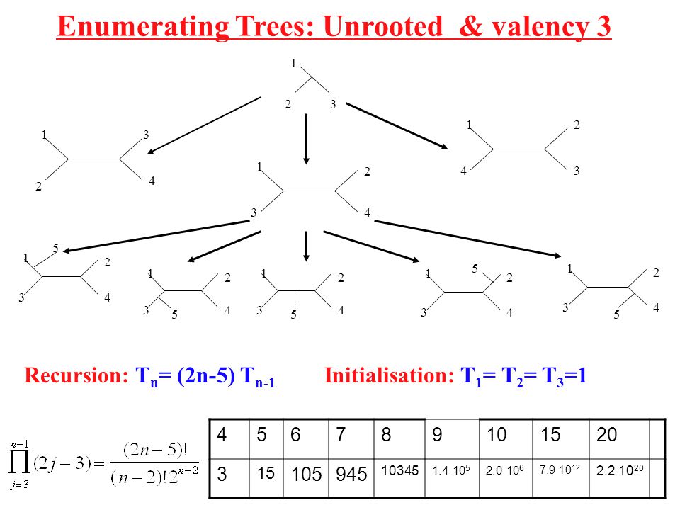 Enumerating Trees: Unrooted & valency 3 2 1 3 1 4 2 3 1 2 3 4 1 2 3 4 1 2 3 4 1 2 34 1 2 34 1 2 34 1 2 34 5 55 5 5 456789101520 3 15 105945 10345 1.4 10 5 2.0 10 6 7.9 10 12 2.2 10 20 Recursion: T n = (2n-5) T n-1 Initialisation: T 1 = T 2 = T 3 =1