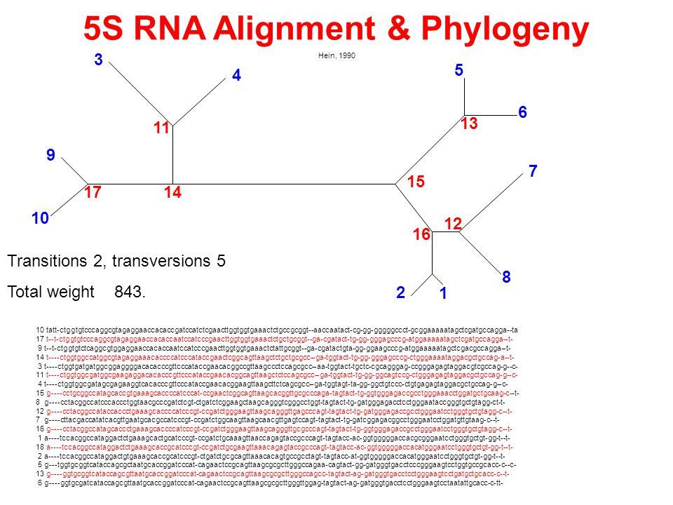 5S RNA Alignment & Phylogeny Hein, 1990 10 tatt-ctggtgtcccaggcgtagaggaaccacaccgatccatctcgaacttggtggtgaaactctgccgcggt--aaccaatact-cg-gg-gggggccct-gcgga