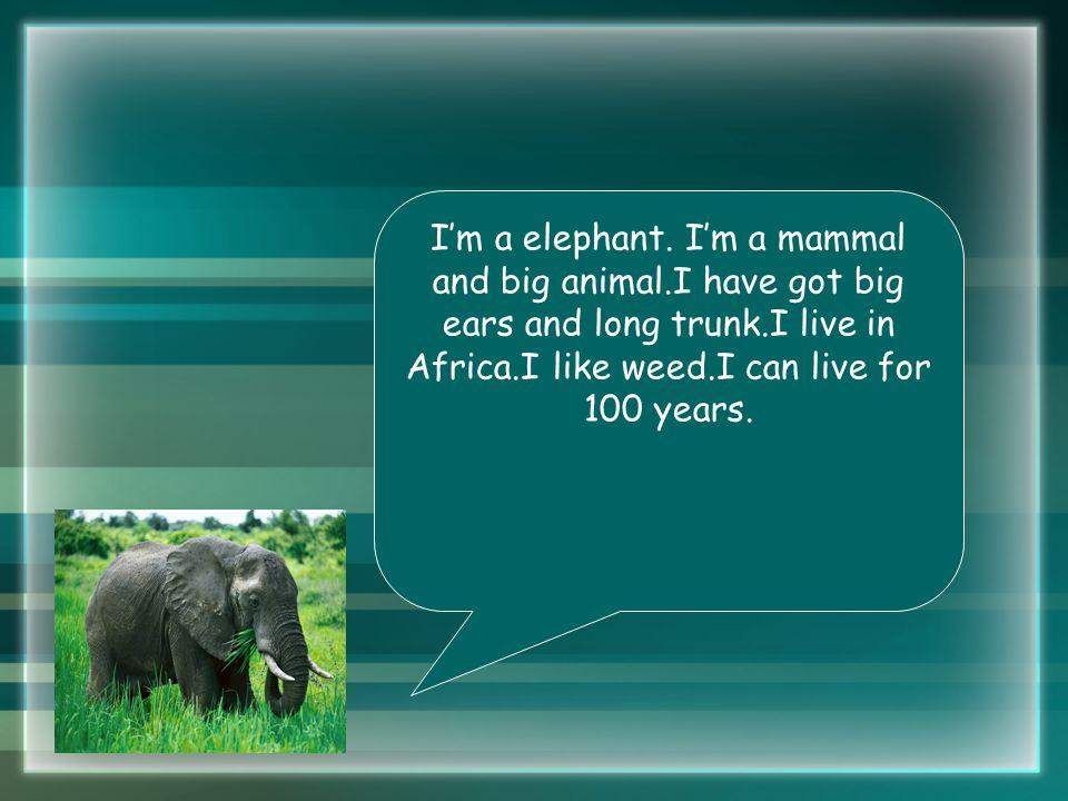 I'm a elephant.