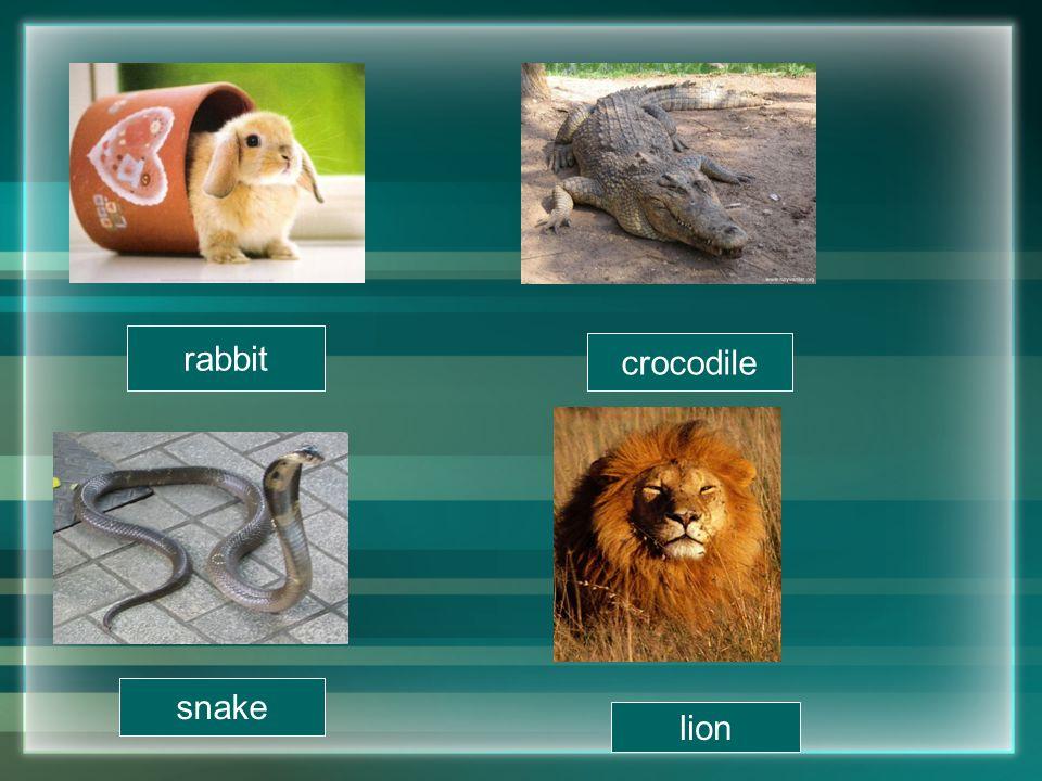 rabbit crocodile snake lion