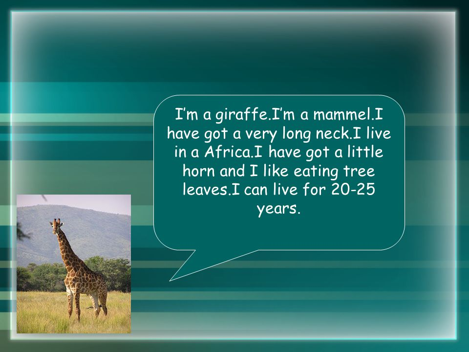 I'm a giraffe.I'm a mammel.I have got a very long neck.I live in a Africa.I have got a little horn and I like eating tree leaves.I can live for 20-25 years.