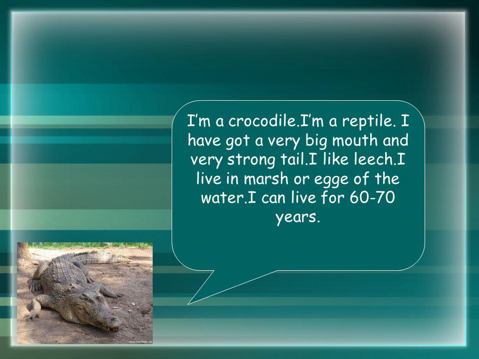 I'm a crocodile.I'm a reptile.