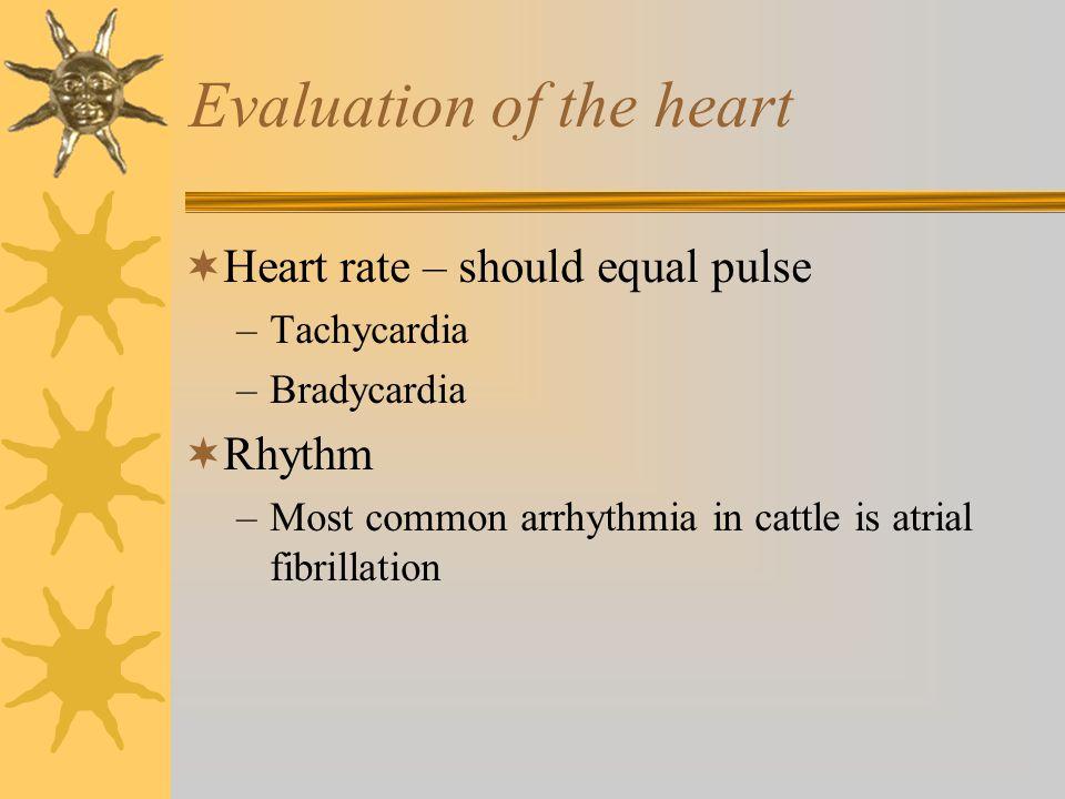 Evaluation of the heart  Heart rate – should equal pulse –Tachycardia –Bradycardia  Rhythm –Most common arrhythmia in cattle is atrial fibrillation