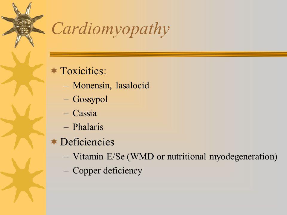 Cardiomyopathy  Toxicities: –Monensin, lasalocid –Gossypol –Cassia –Phalaris  Deficiencies –Vitamin E/Se (WMD or nutritional myodegeneration) –Coppe