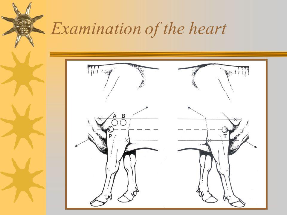 Examination of the heart