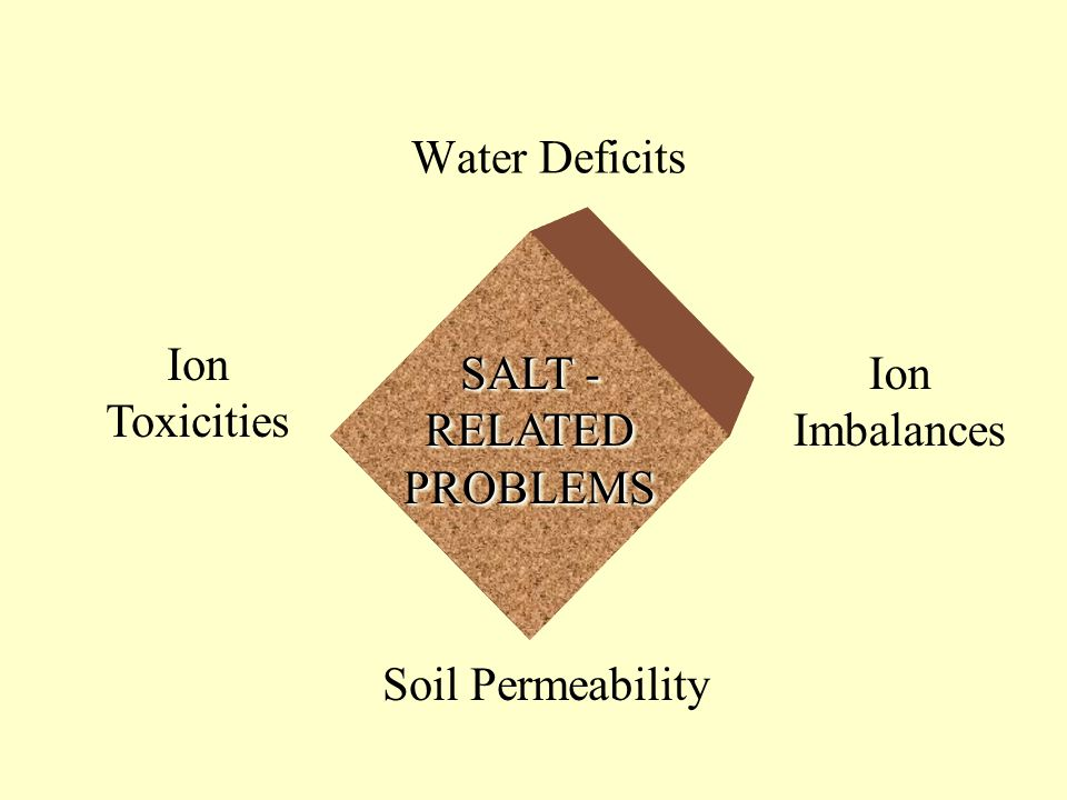 SALT - RELATED PROBLEMS Ion Toxicities Ion Imbalances Soil Permeability Water Deficits