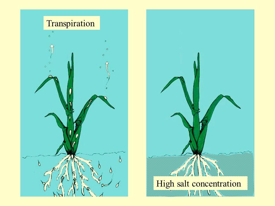 Transpiration High salt concentration