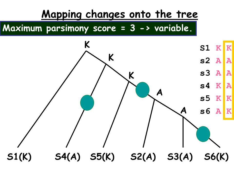 Mapping changes onto the tree S1(K)S2(A)S3(A) S6(K) S5(K) K S1 K K s2 A A s3 A A s4 K A s5 K K s6 A K S4(A) K A K A Maximum parsimony score = 3 -> variable.