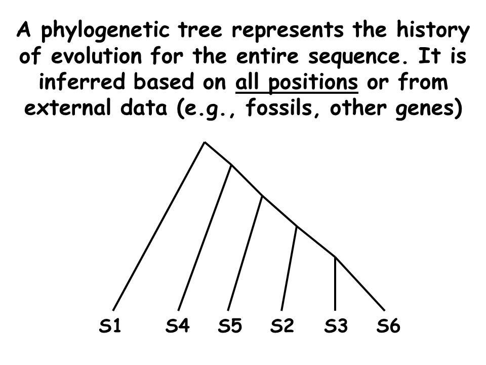 A phylogenetic tree represents the history of evolution for the entire sequence.