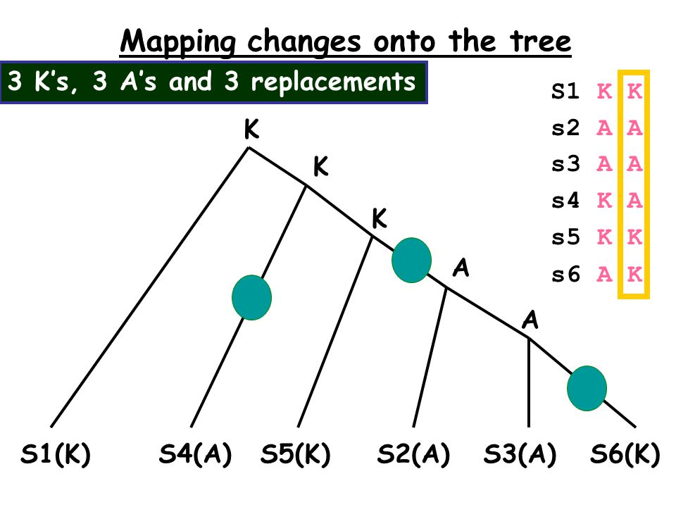 Mapping changes onto the tree S1(K)S2(A)S3(A) S6(K) S5(K) K S1 K K s2 A A s3 A A s4 K A s5 K K s6 A K S4(A) K A K A 3 K's, 3 A's and 3 replacements