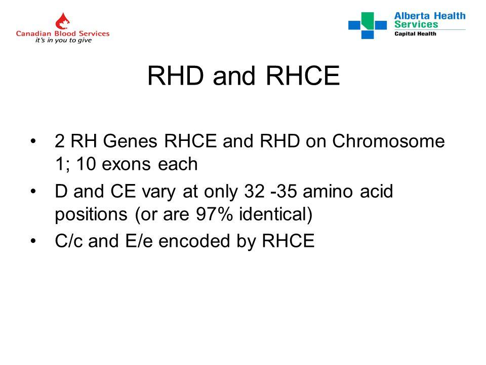 Rh Genetics www.uni-ulm.de/~wflegel/RH/