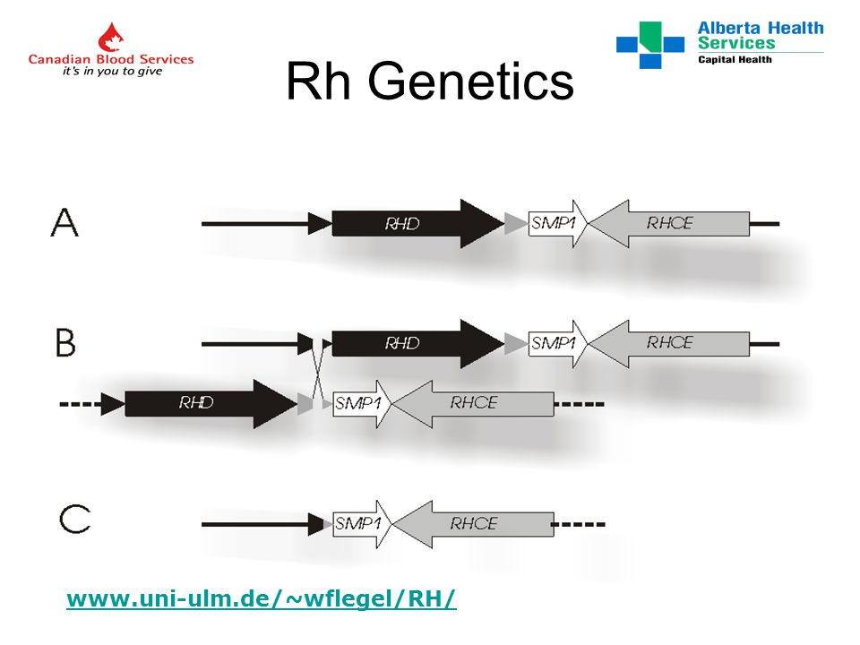 Reporting Results discrepant from historical or blood donor records should be explained (admit defeat in your report) RHD genotyping (if done) should become a part of the permanent record for that individual –along with an explanatory comment Cord and neonatal typing discrepancies also require explanation