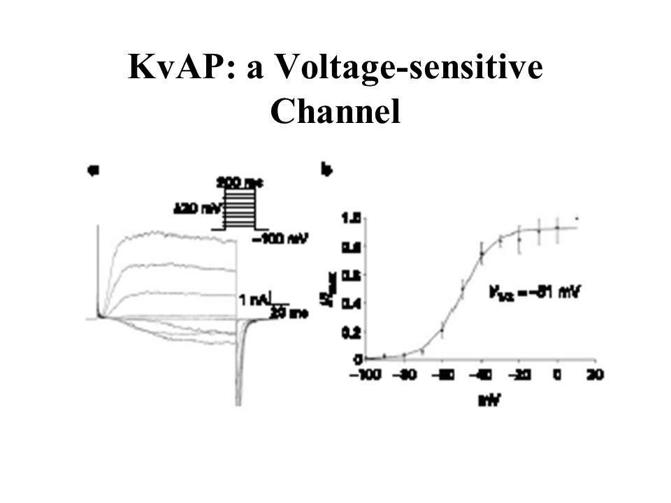 KvAP: a Voltage-sensitive Channel