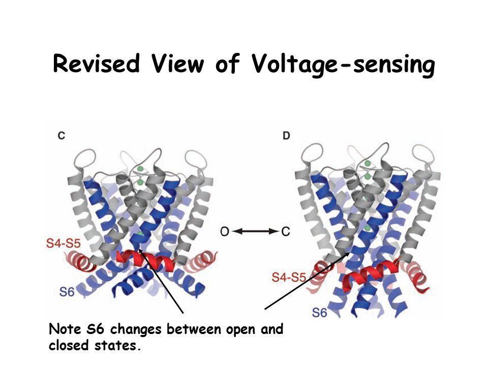 Revised View of Voltage-sensing Note S6 changes between open and closed states.