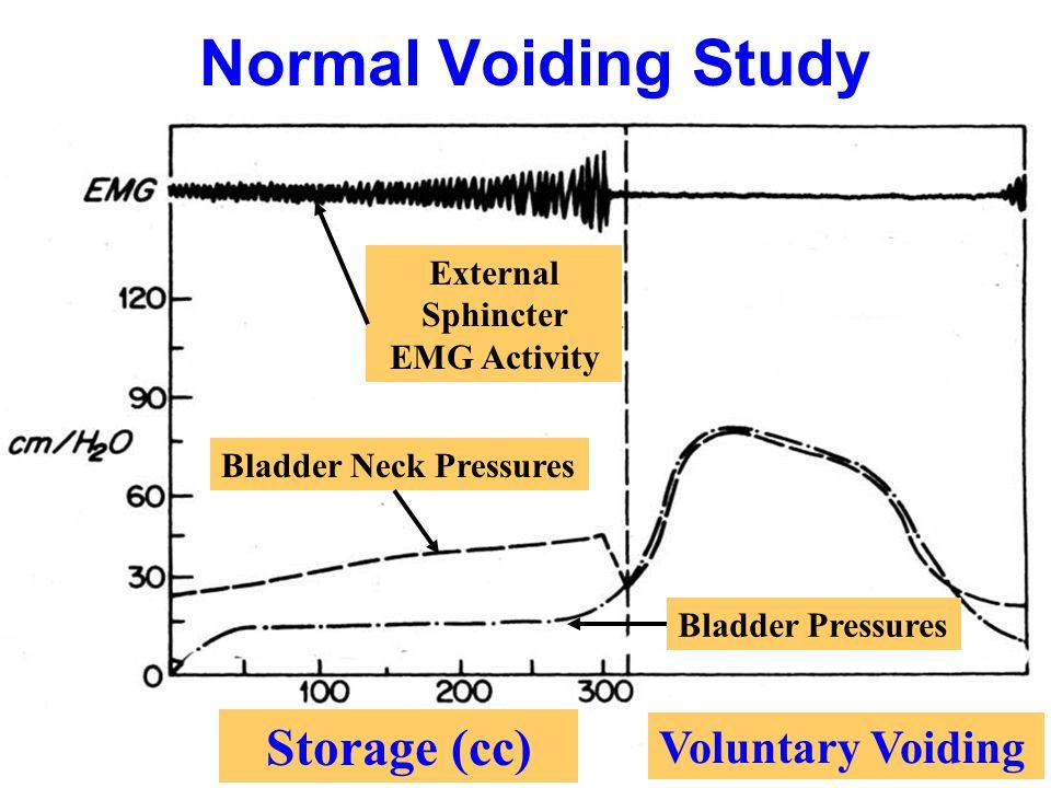 Normal Voiding Study Bladder Neck Pressures Bladder Pressures External Sphincter EMG Activity Storage (cc) Voluntary Voiding