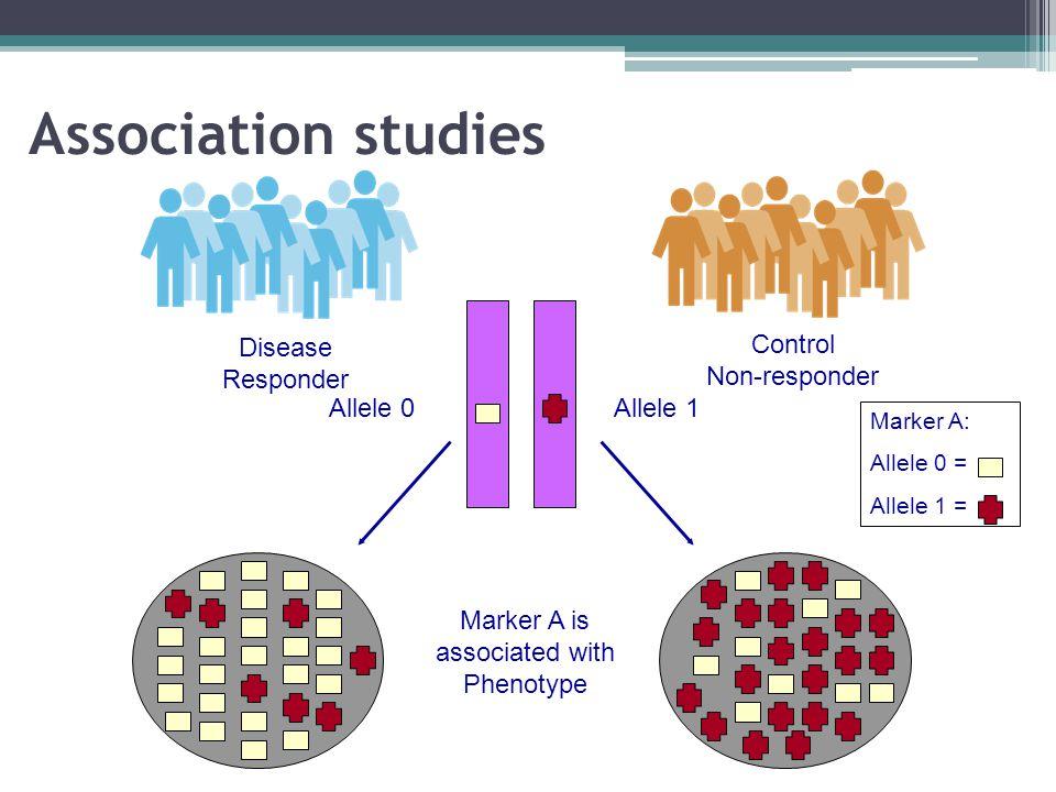 Association studies Disease Responder Control Non-responder Allele 0Allele 1 Marker A is associated with Phenotype Marker A: Allele 0 = Allele 1 =