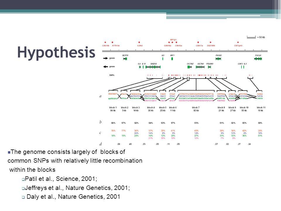 Hypothesis – Haplotype Blocks.