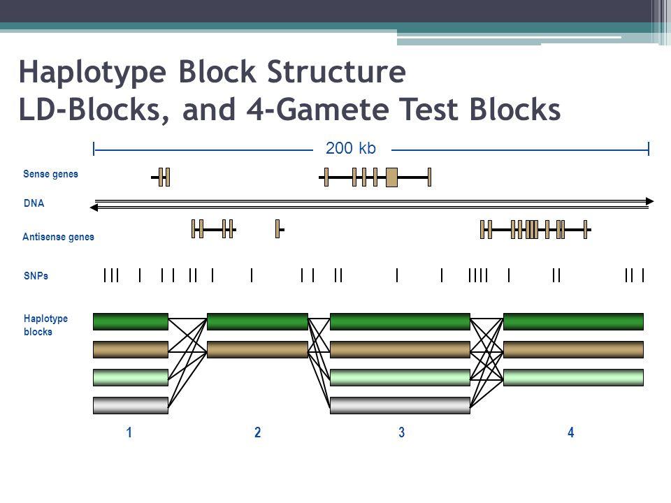 Sense genes Antisense genes 200 kb 1234 DNA SNPs Haplotype blocks Haplotype Block Structure LD-Blocks, and 4-Gamete Test Blocks
